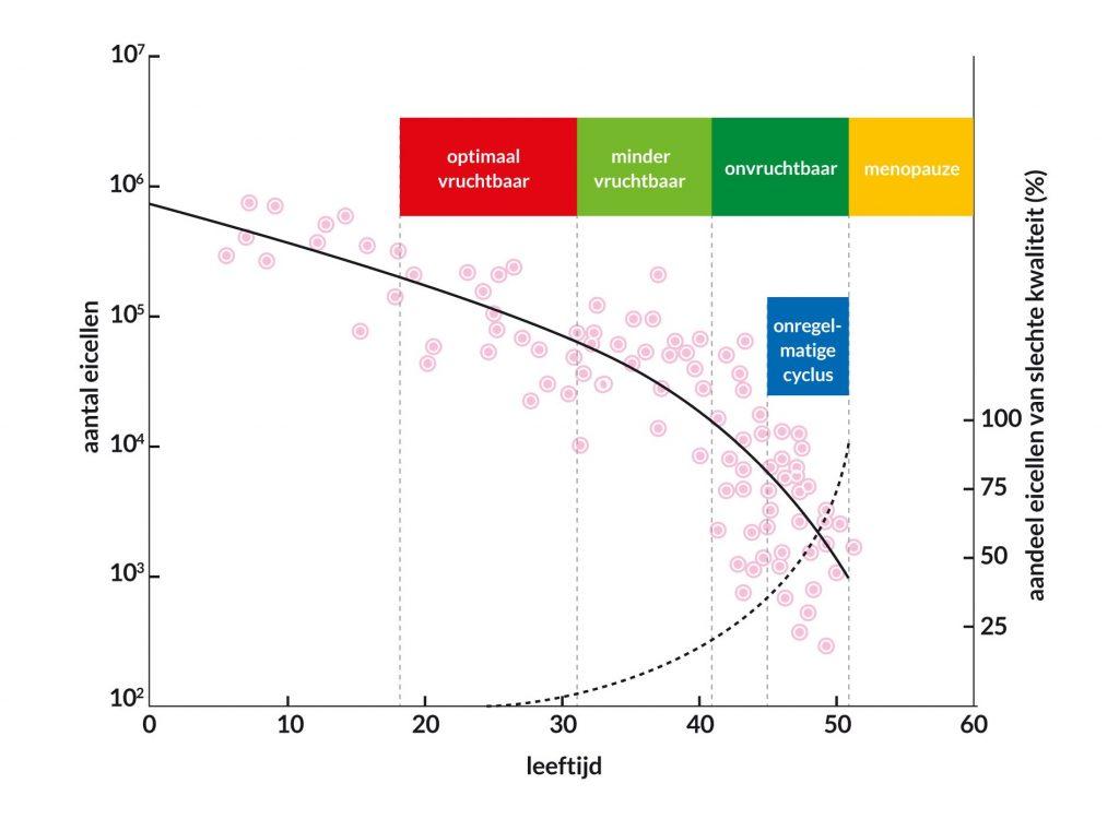 Grafiek: kwaliteit eicellen daalt bij ouder worden
